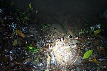 balade-nocturne-monteverde-costa-rica