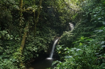 cascade-monteverde-cloudy-forest