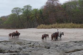 chevaux-santa-teresa-costa-rica