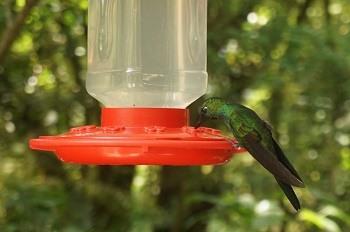 colibri-costa-rica