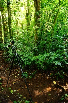 monteverde-cloudy-forest-oiseaux-costa-rica
